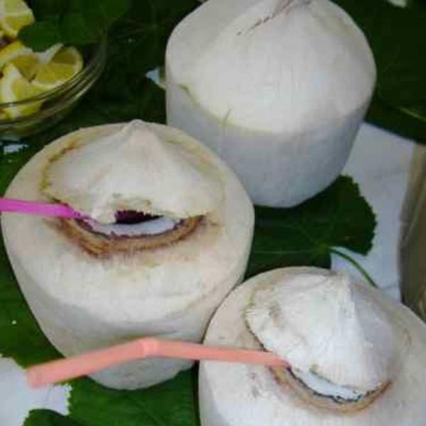 frische Trinkkokosnuss, Thailand, Stück, roh