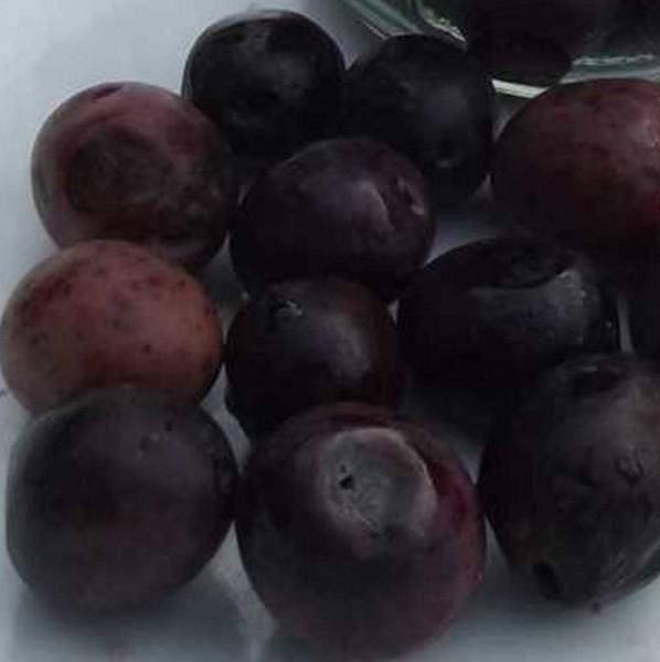 span schwarze Oliven, Bio roh, lose, in Lake mit wenig Himalayasalz 200g